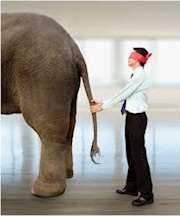 Elefant i blindo