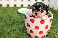 Hund i kopp